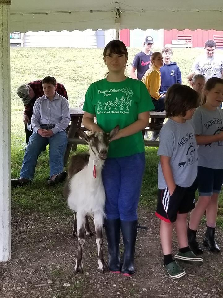 Bowers School Farm 4-H Club to strut their stuff at the upcoming Oakland County Fair!