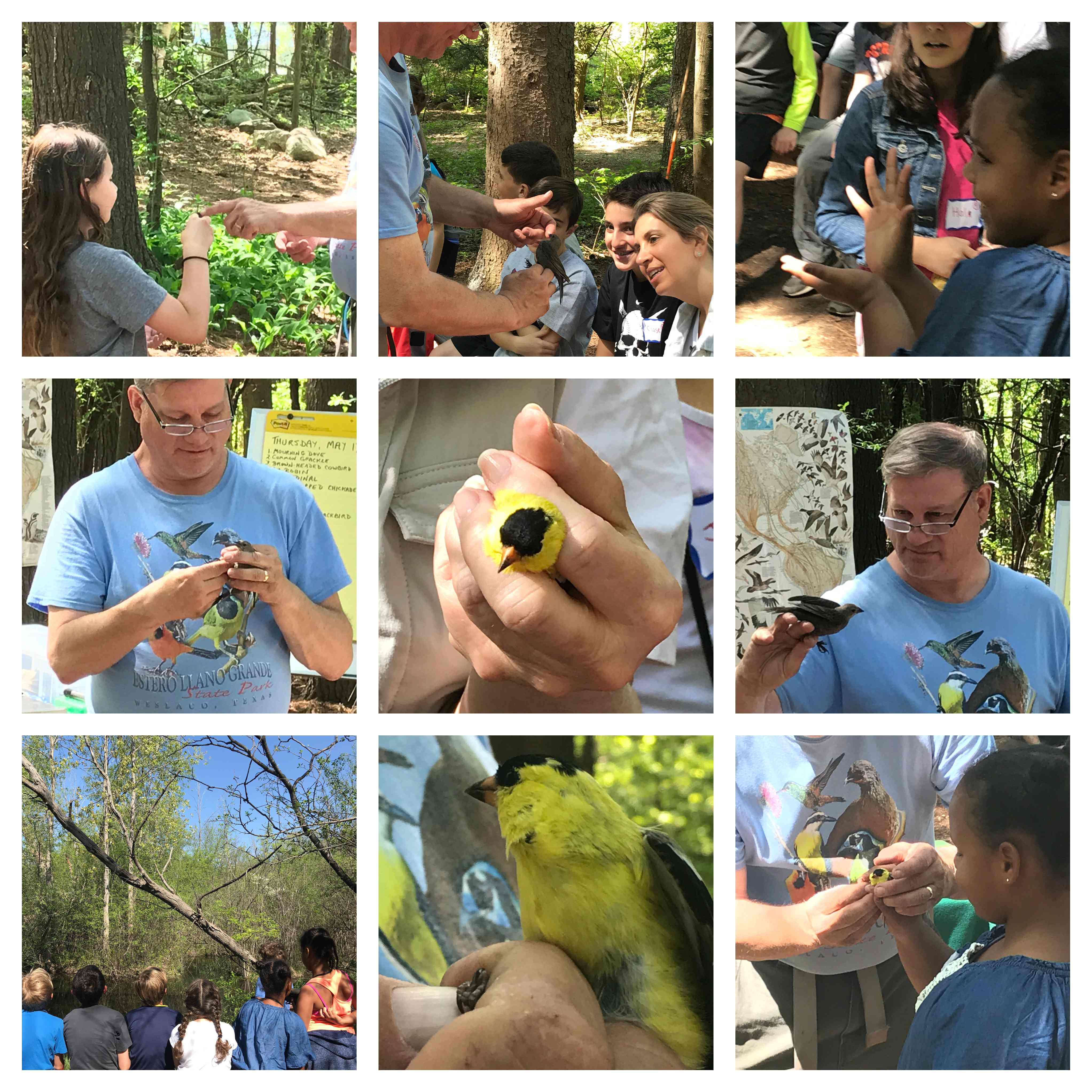 Nature Center Bird Banding